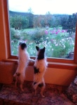 dogs window cosmos