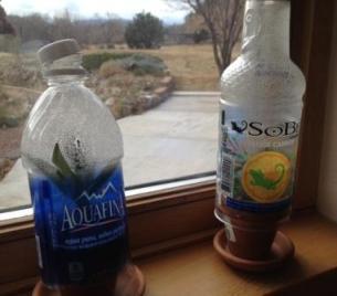 bottles_micro_web