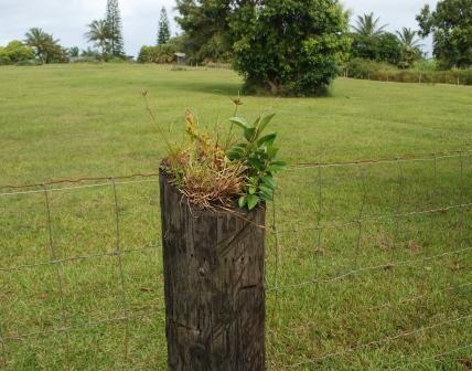 plant in fence post
