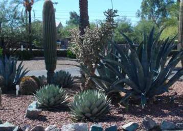 Cacti-gravel