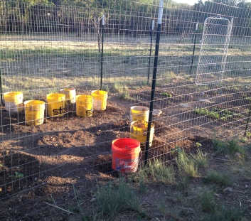 protect-vegetable-seedlings