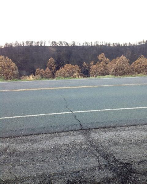 Little Bear wildfire burn scar near Ruidoso, NM