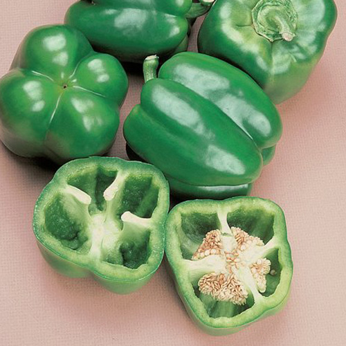 short-season-bell-pepper