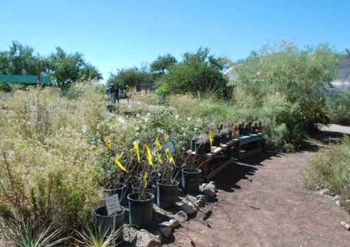 Native nursery in Tucson, Ariz.