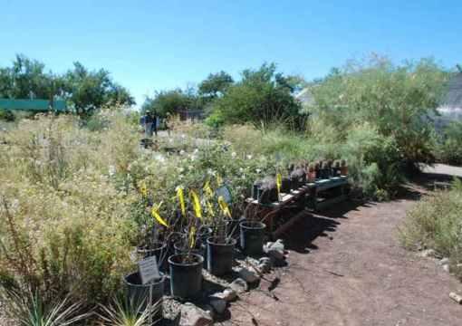Native nursery in Tucson, Ariz.