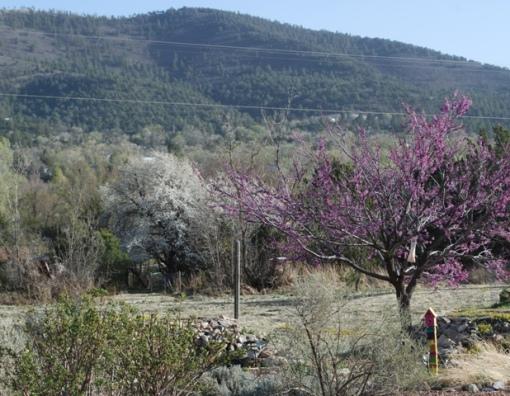 spring blooms in xeric garden