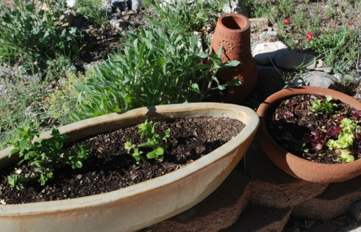 mint and lettuce containers