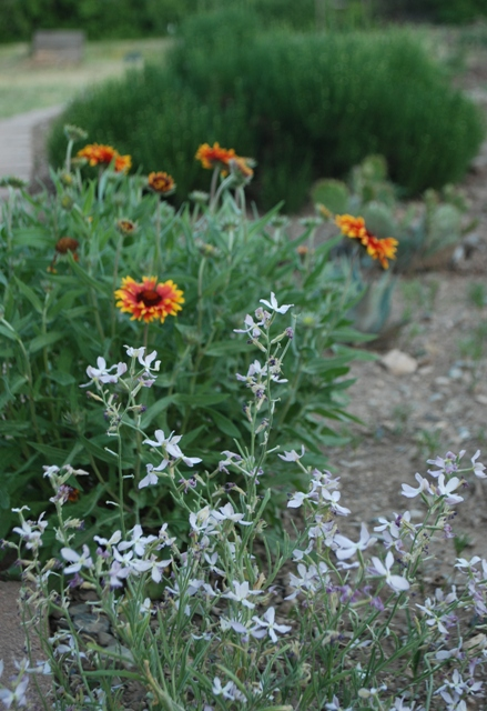 xeric-plants-need-no-water