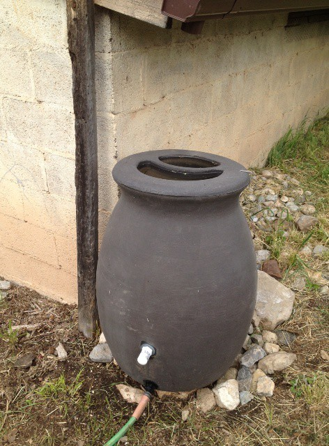 rain barrel filled