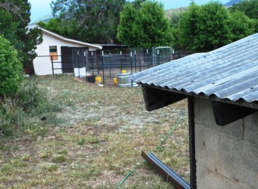 shed rain barrel project