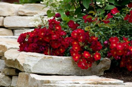 Flower Carpet red