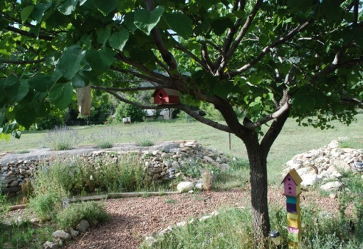 birdhouses in xeric garden