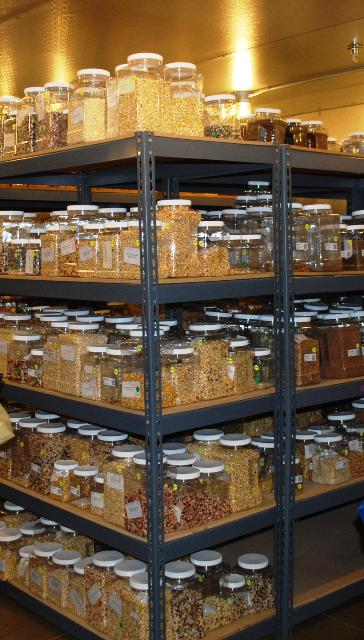 seeds in storage bank